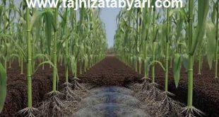 فروش تجهیزات آبیاری بارانی زیر سطحی